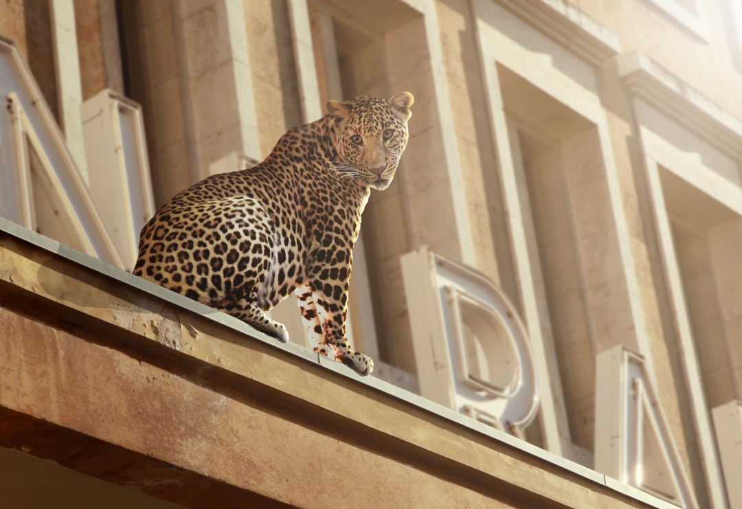 190309_IMG_8609_LEOPARD